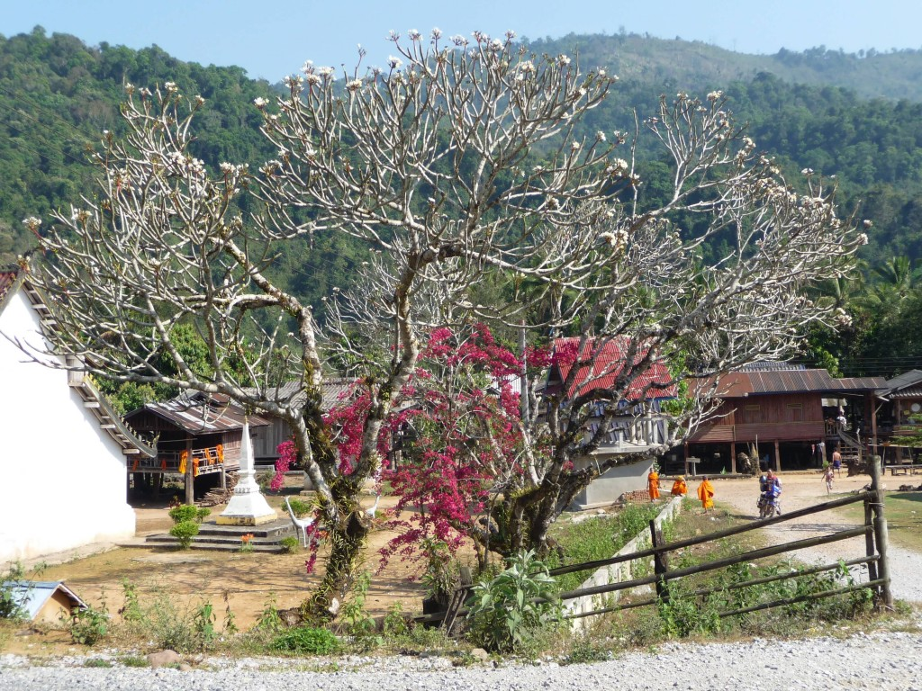 Temple, Luang Namtha