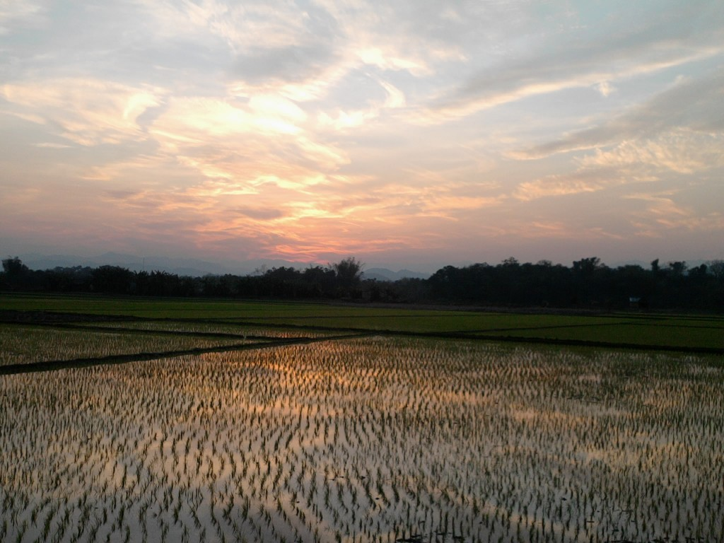 Luang Namtha rice fields and sunset