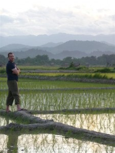 Sticky rice growing in Luang Namtha valley