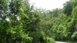 Namha NPA in Luang Namtha