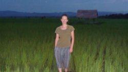 Luang Namtha rice fields