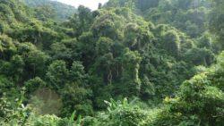 Namha National Protected Area Luang Namtha