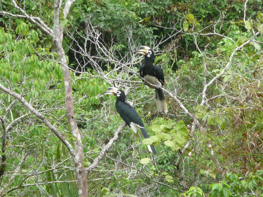 Koh Payam Thailand and it's abundant birdlife
