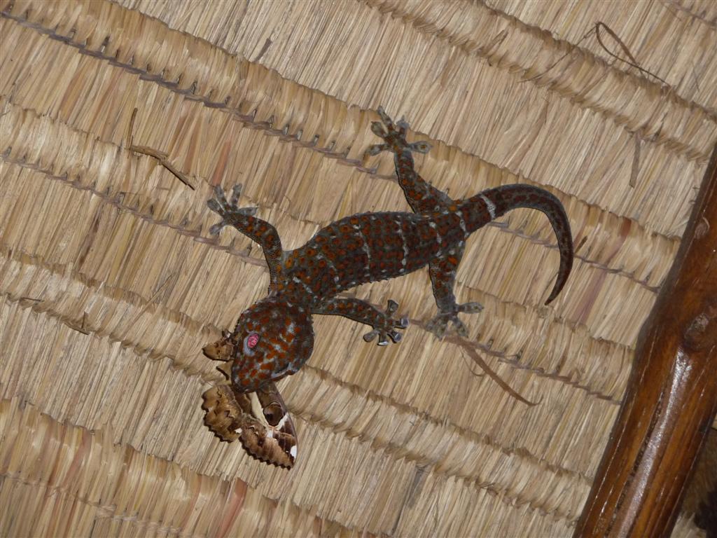 Wildlife on Koh Payam Thailand