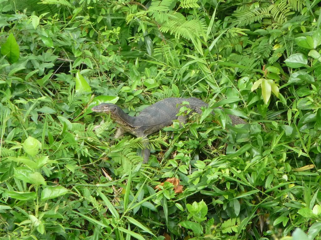 Koh Payam wildlife