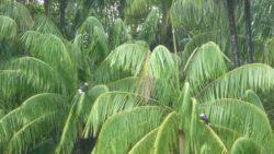 Birds on Koh Payam
