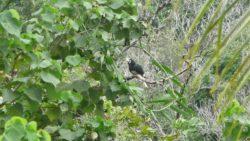 Birdlife on Koh Payam