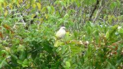 Birdlife on Koh Payam Thailand