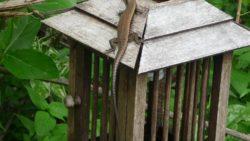 Wildlife on Koh Payam