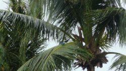 Birds on Koh Lanta