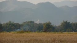 Rice fields and stupa Luang Namtha