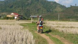Luang Namtha's rice fields
