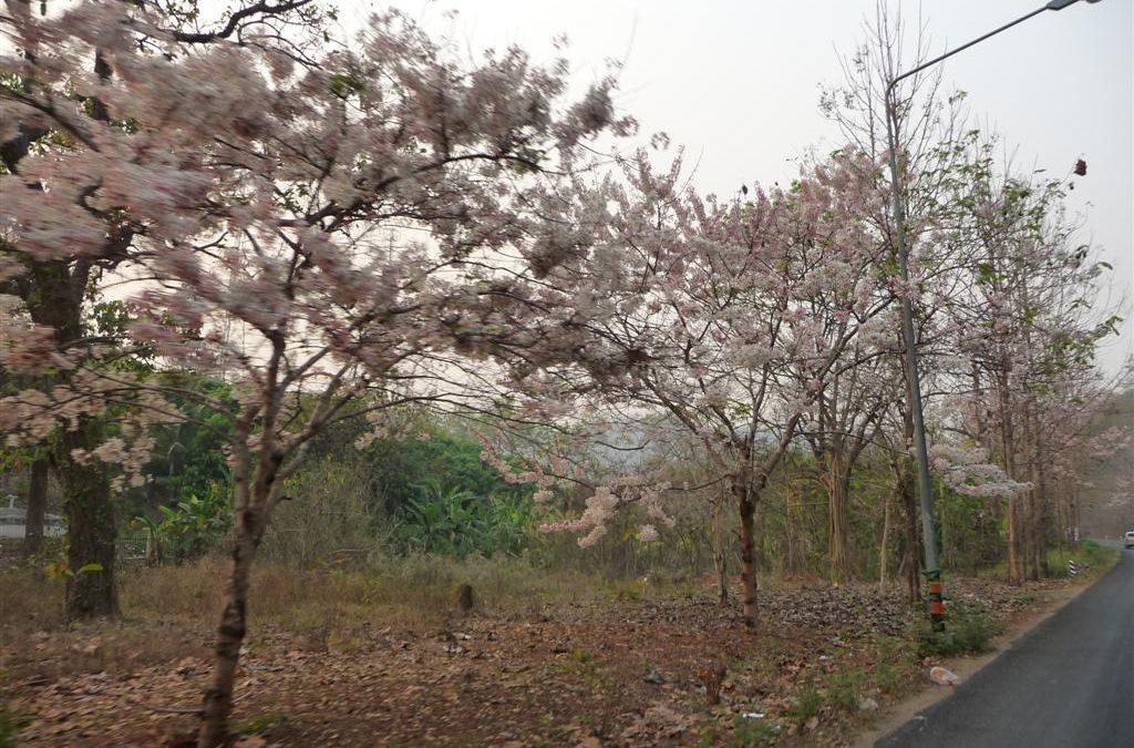 Mae Hong Son Loop