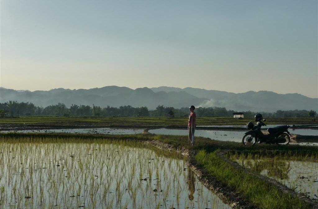 Rice fields of beautiful Luang Namtha