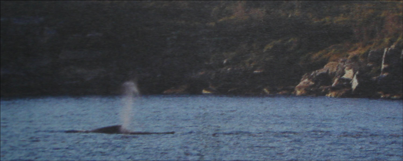 Whale3_0.jpg