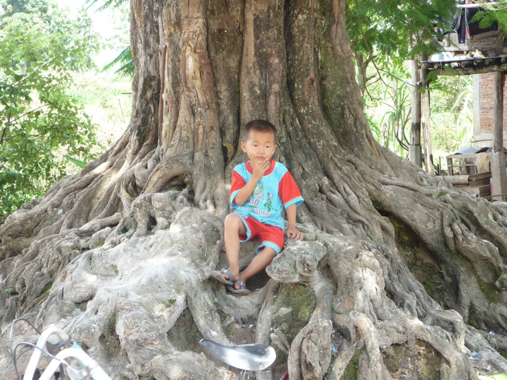 Tai Dam boy chilling on a tree