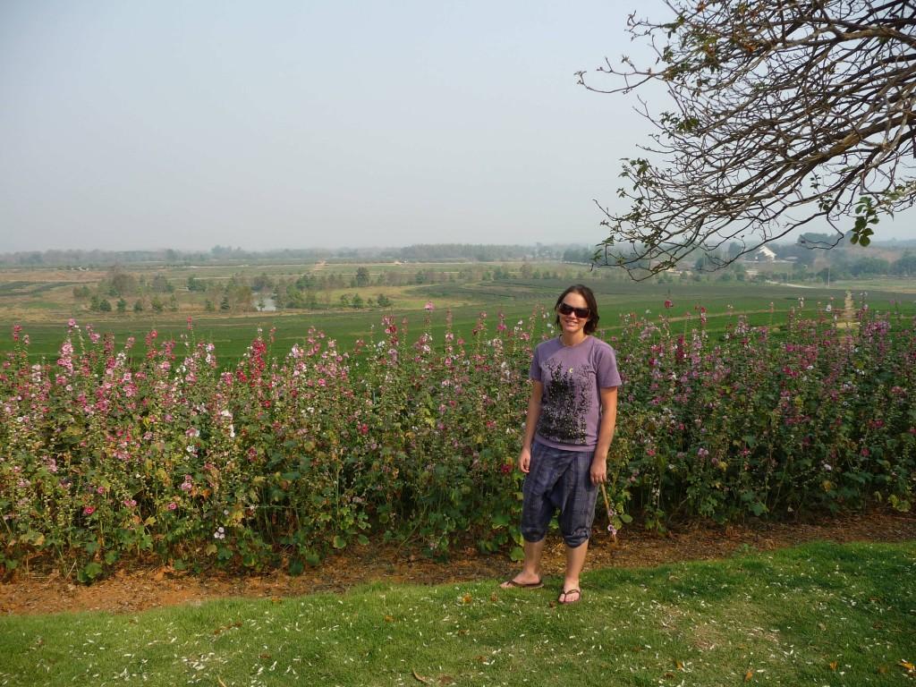 Chiang Rai Tea Gardens