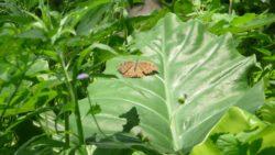 Wildlife in Luang Namtha