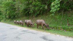 Traffic in Luang Namtha