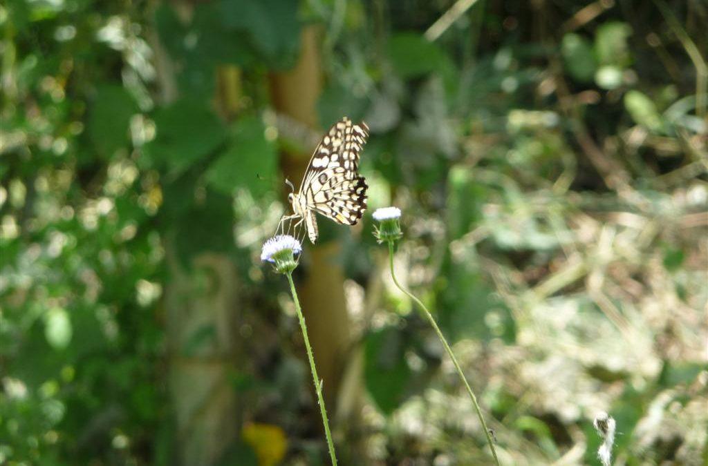 Wildlife Luang Namtha