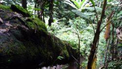 Nam Ha NPA jungle