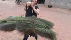 Broom making plants