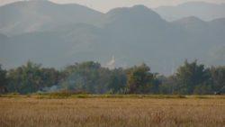 Rice fields and stupa Luang Namtha