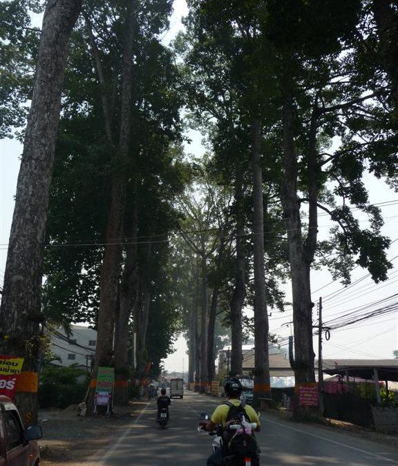 Road Chiang Mai to Lamphun