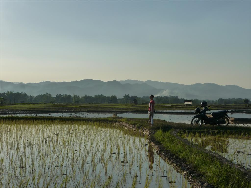 Rice fields of beautiful Luang Namtha