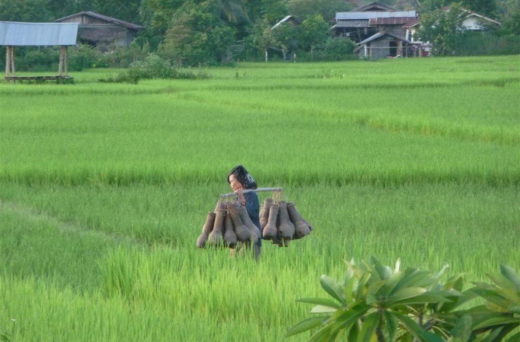 Luang Namtha Culture