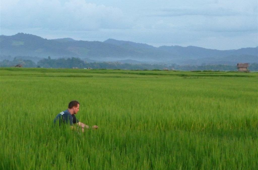 Luang Namtha's beautiful rice fields
