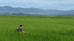 Luang Namtha's beautiful rice fields