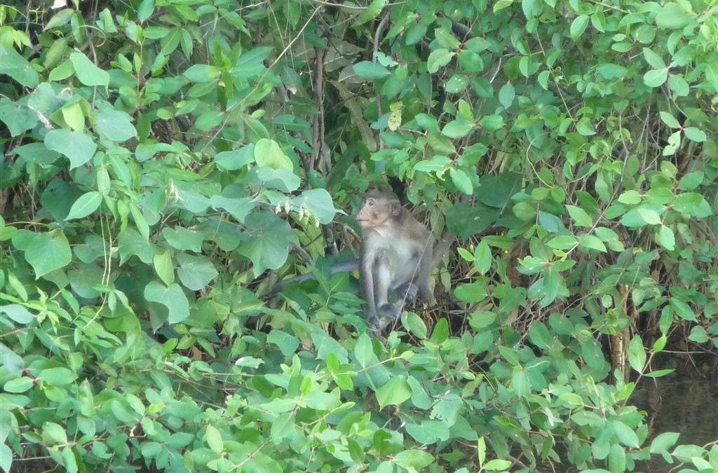 Wildlife in eastern Thailand