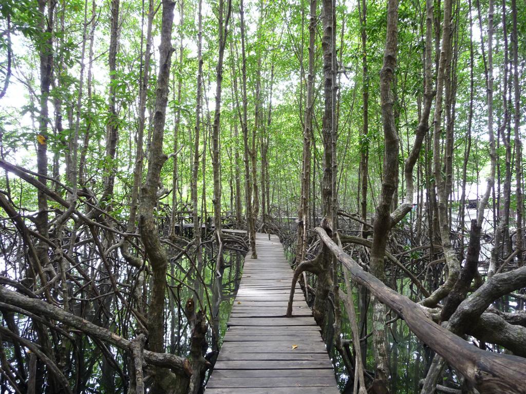 Koh Kong Mangroves